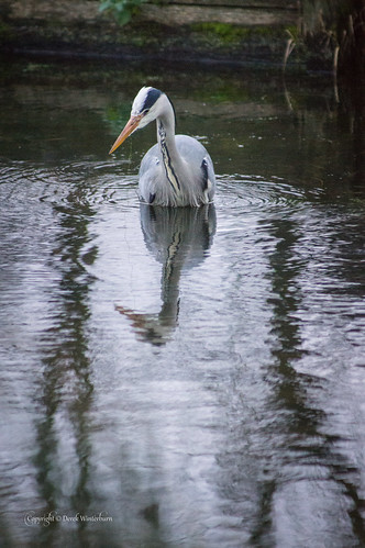 A heron out fishing