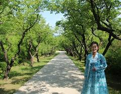 Guide at Kim Jong-suk's birthplace (Ray Cunningham) Tags: trees kim north blossoms korea apricot guide dprk coreadelnorte jongsuk hoeryong