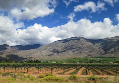 Wine farm (kimbar/Thanks for 2.5 million views!) Tags: africa southafrica vines day cloudy grapes winefarm westerncape