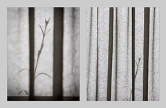 'Once seen, twice photographed ... ' (Canadapt) Tags: portugal window grass diptych lisbon curtain perspective seeing comparison mealhada canadapt