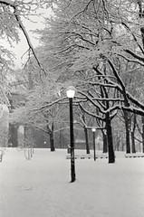 Astoria = Narnia (DRodino) Tags: park trees light bw white snow storm film analog pentax k1000 branches snowstorm lamppost narnia pentaxk1000 astoria stark deserted wha astoriapark blanketed
