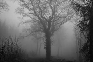 The eerie tree