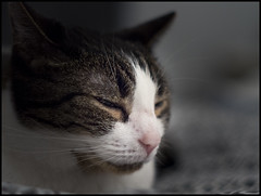 Sleepy (apg_lucky13) Tags: cat olympus sleepy mf konica manualfocus sleepycat mft mirrorless fotodiox konicahexanon microfourthirds konicahexanonar57mmf14 olympusepl5 epl5 jasdaco