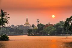 Shwedagon Pagoda at Sunset (reubenteo) Tags: sunset lake heritage history landscape temple pagoda asia cityscape shwedagon yangon burma culture royal buddhism myanmar barge rangoon kandawgyi karaweik