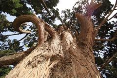 Cypress - Fin Garden (blondinrikard) Tags: garden iran fin kashan unescoworldheritage fingarden baghefin