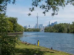 city park (D-j-L) Tags: park ca trees lake toronto ontario canada tower canon geese cntower goose s100 torontoislands