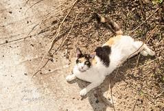 Mirame gato (José E.Egurrola/www.metalcry.com) Tags: pet animal cat kitten feline kitty gato catus lookatme felino meow mascota pur gatito coolcat 2015 tumbado notmycat bestofcats impressedbeauty catonthefloor miramegato gatoenelsuelo