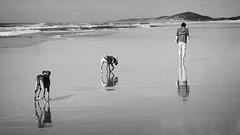 Lone reflections (dave.fergy) Tags: people blackandwhite dog abstract man reflection beach water monochrome animals landscape mono sand holidays waves mood alone au australia reflected reflect queensland mammals peregianbeach reflectingreflections on1pics sunshinecoast2015