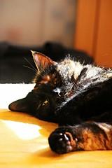 DND - Do not disturb. (hockeycatmuc) Tags: cats cat canon germany munich mnchen bayern deutschland bavaria tiere katze tamron katzen tierbilder tierwelt canoneos700d tamron16300mmf3563diiivcpzdb016