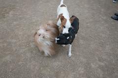 george's dog run, washington square park (Charley Lhasa) Tags: ricohgrii grii 183mm 28mm35mmequivalent iso800 ¹⁄₈₀secatf28 0ev aperturepriority pattern noflash r013361 dng uncropped taken170310175833 uploaded170331005224 3stars flagged adobelightroomcc20159 lightroomcc20159 adobelightroom lightroom charley charleylhasa lhasaapso dog captain dogs georgesdogrun washingtonsquareparkdogrun dogrun bigdogrun washingtonsquarepark wsp nycparks citypark urbanpark greenwichvillage manhattan newyorkcity nyc newyork ny tumblr170331 httpstmblrcozpjiby2k6ssrk