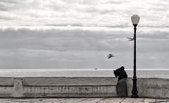 The lamppost ❖ Le lampadaire (Chizuka2010) Tags: railing fence hff fencefriday portugal algarve travel ocean water lamppost lampadaire woman seagull solitude chizuka2010 luciegagnon olympusem10mkii