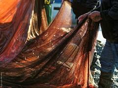 filets_P3300030 (PhotosLP06) Tags: crosdecagnes pêcheurs poutine