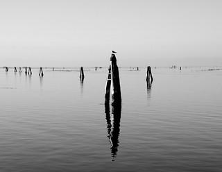 Laguna veneziana.