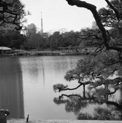 170305_ZenzaBronicaS2_009 (Matsui Hiroyuki) Tags: zenzabronicas2 nikonnikkorp75mmf28 fujifilmneopan100acros epsongtx8203200dpi