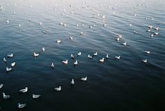 (SingC) Tags: seagull bangpu film leicaminilux