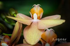 Change your Point of View/ Die Perspektive wechseln (juerger69) Tags: orchidee engel macro perspektive wechsel blume angel change flower