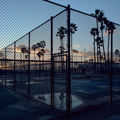 chainlink sunset. venice beach, ca. 2017. (eyetwist) Tags: eyetwistkevinballuff eyetwist sunset venicebeach chainlink fence paddle tennis courts mamiya 6mf 50mm kodak portra 160 mamiya6mf mamiya50mmf4l kodakportra160 ishootfilm analog analogue film emulsion mamiya6 square 6x6 mediumformat 120 primes filmexif iconla epsonv750pro lenstagger ishootkodak venice westla angeleno los angeles la socal california losangeles ocean beach oceanfrontwalk pacific baywatch illuminated goldenhour magic clouds cloudporn beauty weather golden silhouette puddle rain storm geometric grid dusk palmtrees mirror reflection lines geometry
