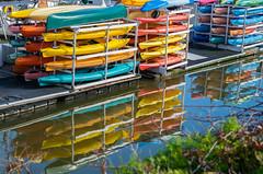 Pick Your Favorite Color! (tquist24) Tags: california nikon nikond5300 outdoor ventura color colorful colors dock geotagged harbor kayak kayaks ocean reflection reflections venturaharbor water unitedstates