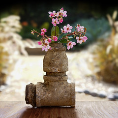 Ceci n'est pas une pipe (Slimdandy) Tags: pipe gardenias vase garden thisisnotapipe sonyilce7r plumbingpipe magritte