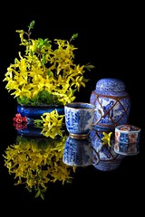 A Further Hint of the Orient (memoryweaver) Tags: memoryweaver china blueandwhite antique tea cup gingerjar stilllife blacktile reflective reflection yellow flowers forsythia orient