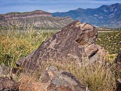 Frog, circa 900 to 1400 CE, Three Rivers Petroglyph Site, New Mexico (www.clineriverphotography.com) Tags: rockart sunrisesunset threeriverspetroglyphsite 2014 peoples jornadamogollan petroglyph location newmexico usa light