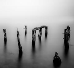 Remnants (strupert) Tags: d810 nikon blackandwhite bnw poles remnants minimalism seascape winter monochrome bigstopper circularpolarizer miststripe lee longexposure fjord norway agdenes