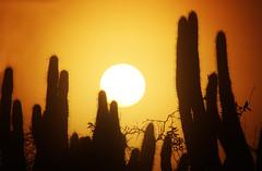 Continuando con bellos recuerdos de las vacaciones….. On  continue avec de beaux souvenirs des vacances (Marina-Inamar) Tags: villaojodelagua santiagodelestero argentina cactus ocaso atardecer amanecer silueta contraluz naranja