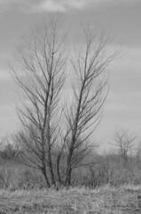 April 6th, Four Years Ago (Jayhawk Explorer) Tags: ipiccy trees monochrome bw blackandwhite spring grass wetlands bakerwetlands lawernce kansas ks samedaydifferentyear nature