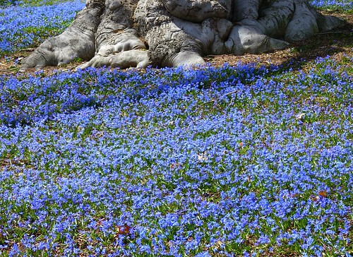"""Field of Blue • <a style=""""font-size:0.8em;"""" href=""""http://www.flickr.com/photos/52364684@N03/33964205035/"""" target=""""_blank"""">View on Flickr</a>"""