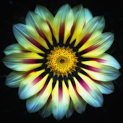 glowing can be a good thing (SleepingBear) Tags: friends ngc sleepingbearimagewear asingleflower macroflowerlovers awesomeblossoms unforgettableflowers sonydscrx100
