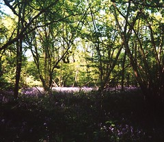 Clearing (teaselbrush) Tags: camera wood uk trees light england white west film nature strange bluebells mystery angel rural forest lens toy photography sussex countryside slim angle widescreen wide mysterious british analogue occult knoll clapham clearing goring superheadz