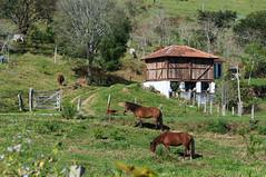 130706_Caminho da Fe 2013_043.jpg (Luiz Henrique Rocha Rodrigues) Tags: caminhodaf2013 caminhada caminheiro caballo cavalo equine equino fauna horse luizhenriquerocharodrigues animal caminhodaf