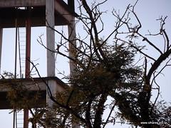 Amanhecer no Centro de Educação Unificado Jaguaré - inverno de 2013 (@profjoao) Tags: ceu amanhecer jaguaré jaguare joaocesar ceujaguaré ceujaguare wwwprofjoaonetbr