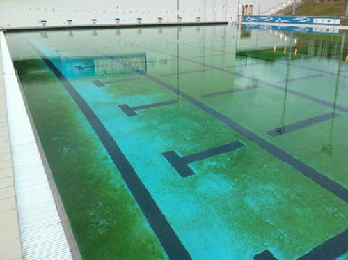 algas en piscinas