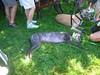 7-22-2012ArnoldArboretum016