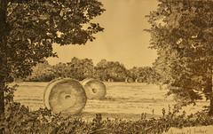Baker's Lane harvest (amanda.parker377) Tags: autumn england countryside harvest fields essex pencildrawing blacknotley derwentgraphitepencils
