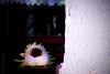 Run Dry (donlunzo16) Tags: city house flower color film window town bottle aperture nikon stuttgart dry run pack 02 d200 preset vsco