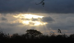 Die Sonne nach dem Sturm - Brunsholm; Bergenhusen, Stapelholm (72a) (Chironius) Tags: sky clouds germany deutschland nuvole himmel wolke wolken ciel cielo alemania nuage allemagne nube hemel germania schleswigholstein gegenlicht gkyz ogie pomie   niemcy bergenhusen   stapelholm pomienie szlezwigholsztyn