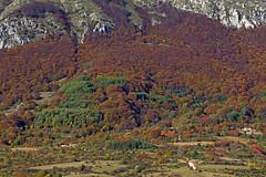 Parco Regionale Sirente Velino (vanto5 (Antonio Vaccarini)) Tags: trip travel italien autumn italy automne italia herbst otoo autunno italie abruzzo laquila canonef24105mmf4lisusm altopianodellerocche canoneos7d parcoregionalesirentevelino