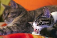 IMG_6639 (Alx Art Photo) Tags: cats cat gatti