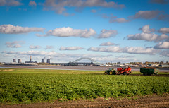 Carrot Harvest at Hale (Martin Peers) Tags: tractor liverpool cheshire farm farming harvest hale runcorn merseyside widnes rivermersey runcornbridge