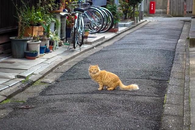 Today's Cat@2014-01-25