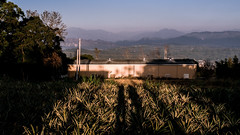 20140125170537 (morningfog624) Tags: lumix panasonic flashback  m43  gm1 sunnyhills  morningfog624 dmcgm1 panasoniclumixdmcgm1