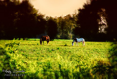 RC_0005 (Andy Savelle Photography Portfolio) Tags: animals rural farm south country southern dixie downsouth countrylife farmlife countryliving rurallife ruralliving southernliving lifeonthefarm southernlife lifeinthecountry livinginthesouth andysavellephotography