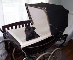 Bernie in SilverDawne (Pram Collector) Tags: baby black vintage silver carriage cross antique pug pram silverdawne