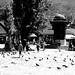 Place aux pigeons (Sarajevo)