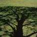Cherry Tree Shadow
