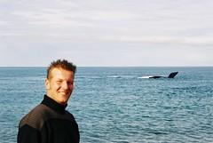 Humpback whales, Peninsula Valdez, Argentina