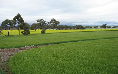Bella, Delungra NSW 2403