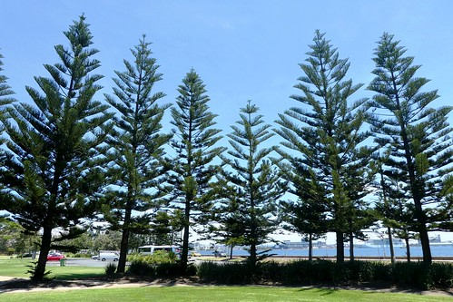 Newcastle NSW Foreshore Park